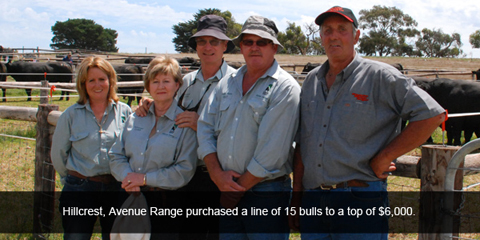 Hillcrest, Avenue Range purchased a line of 15 bulls to a top of $6,000
